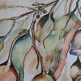 Cheryl Miller - Australian Gumnuts