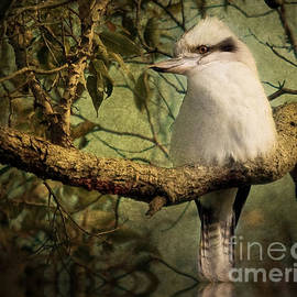 Kym Clarke - Australian Kookaburra