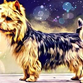 Scott Wallace - Australian Terrier
