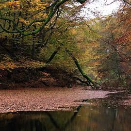 Colette V Hera  Guggenheim  - Autumn Colors Denmark