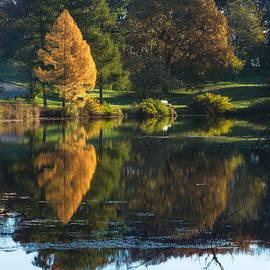 Lindley Johnson - Autumn - Golden Tree Reflection
