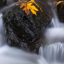 Mike Dawson - Autumn Above and Below