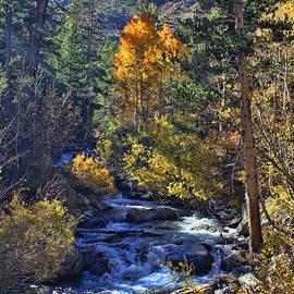 Lidia Anderson - Autumn at Bishop Creek