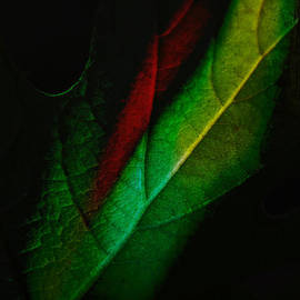 Rene Crystal - Autumn At Midnight...