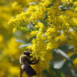Tannis  Baldwin - Autumn Bee