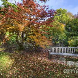 Darren Wilkes - Autumn Bench