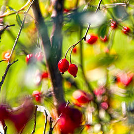 Stylianos Kleanthous - autumn berries