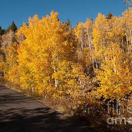 Robert Ford - Autumn Colors along Kolob Terrace Road Zion National Park Utah