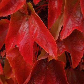 Colette V Hera  Guggenheim  - Autumn Colour Change