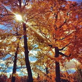 Dan Sproul - Autumn Days
