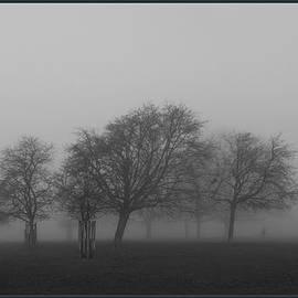Maj Seda - Autumn Dense Fog