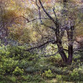 Debra and Dave Vanderlaan - Autumn Enchantment