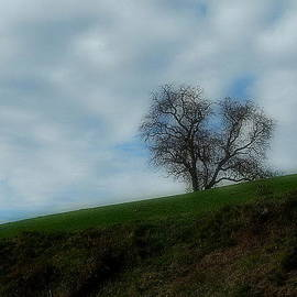 Marija Djedovic - Autumn etude