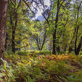 Lynn Bauer - Autumn Ferns in Yosemite Valley