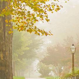 Rima Biswas - Autumn fog