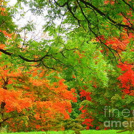Lingfai Leung - Autumn Foliage