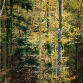 Maria Bobrova - Autumn Forest 2