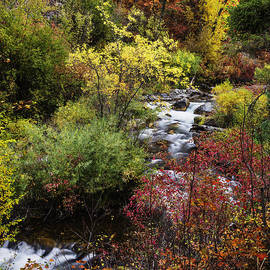 Vishwanath Bhat - Autumn Glory at Palisades Creek in Idaho