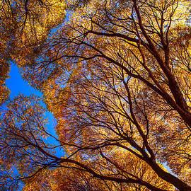 Jenny Rainbow - Autumn Glory