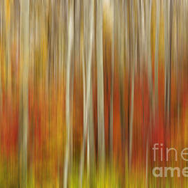 Reflective Moment Photography And Digital Art Images - Autumn Glory