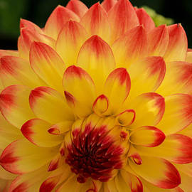 Linda Foakes - Autumn Glow