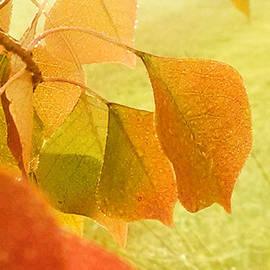 Nadia Korths - Autumn Glow