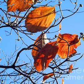 Robyn King - Autumn Glow