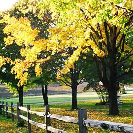 Julie Ketchman - Autumn Gold Glows in Michigan