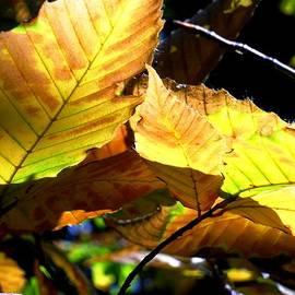 Karen  Majkrzak - Autumn Gold and Green