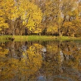 Lori Frisch - Autumn Gold Reflections