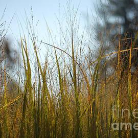 Glenn Morimoto - Autumn Grass
