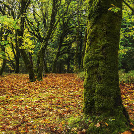 Vishwanath Bhat - Autumn in Oregon USA