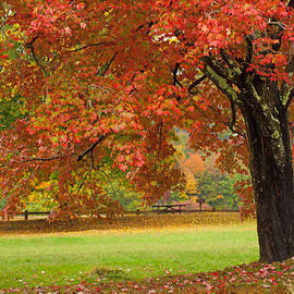Karol  Livote - Autumn In The Park