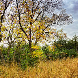 Ann Powell - Autumn In The Tall Grass Prairie - landscape photography
