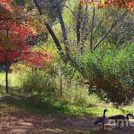 Photographic Art and Design by Dora Sofia Caputo - Autumn In The Woods