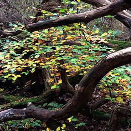Colette V Hera  Guggenheim  - Autumn Joy Denmark