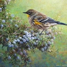 R christopher Vest - Autumn Juniper Berries And Yellow Rumped Warbler