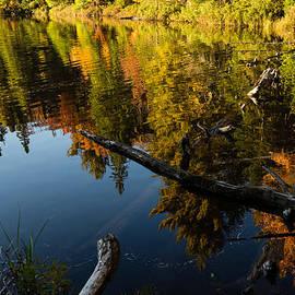 Georgia Mizuleva - Mesmerizing Fall Reflections - Algonquin Autumn Lake