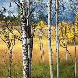 Theresa Tahara - Autumn Landscape