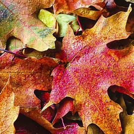 Christi Kraft - Autumn Leaves