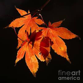 Inge Riis McDonald - Autumn Leaves