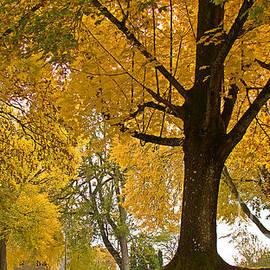 Beverly Guilliams - Autumn Memories