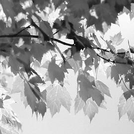 Kathy Bassett - Autumn Monochrome