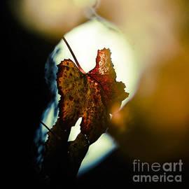 Maria Bobrova - Autumn Mood 2