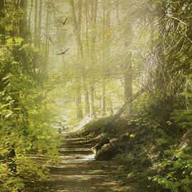 Diane Schuster - Autumn Myst