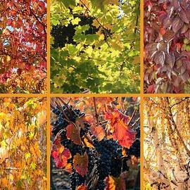 Carol Groenen - Autumn Nature Collage