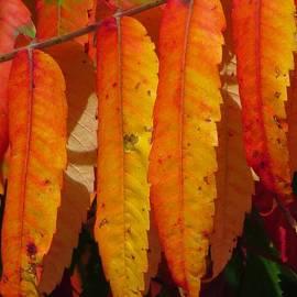 Lori Frisch - Autumn Orange