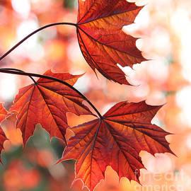 Nancy Harrison - Autumn Orange