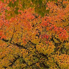 Nick  Boren - Autumn Palette