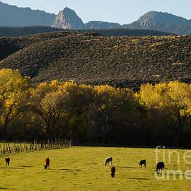 Robert Ford - Autumn pastures along the Virgin River Rockville Utah